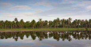 Arbres de noix de coco Photographie stock