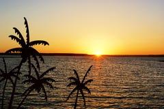 Arbres de noix de coco au coucher du soleil Photos libres de droits