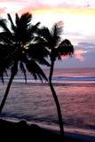 Arbres de noix de coco au coucher du soleil Images stock