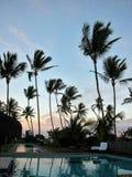 Arbres de noix de coco au coucher du soleil sur la côte du Bahia Photographie stock libre de droits