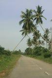 Arbres de noix de coco au-dessus de route de village Photographie stock libre de droits