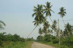 Arbres de noix de coco au-dessus de route de village Image stock