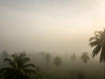 Arbres de noix de coco avec le brouillard à l'arrière-plan d'aube Images libres de droits