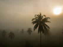Arbres de noix de coco avec le brouillard à l'arrière-plan d'aube Photographie stock libre de droits