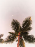 Arbres de noix de coco contre le ciel Image stock