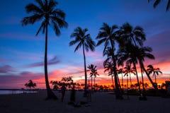 arbres de noix de coco dans le coucher du soleil en Hawaï Photo libre de droits