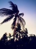 Arbres de noix de coco dans le crépuscule Image libre de droits