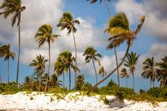 Arbres de noix de coco de plage de Zanzibar Photographie stock