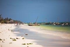Arbres de noix de coco de plage de Zanzibar Photographie stock libre de droits