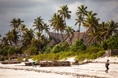 Arbres de noix de coco de plage de Zanzibar Images libres de droits