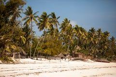 Arbres de noix de coco de plage de Zanzibar Photo stock