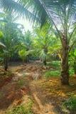 Arbres de noix de coco du sud du Kerala Image stock