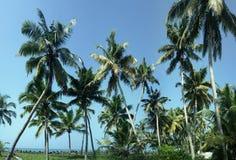 Arbres de noix de coco du sud du Kerala Photo libre de droits