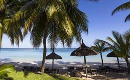 Arbres de noix de coco en île des Îles Maurice Photographie stock