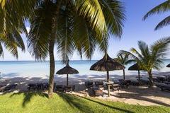 Arbres de noix de coco en île des Îles Maurice Photo libre de droits