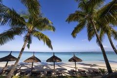Arbres de noix de coco en île des Îles Maurice Photos libres de droits