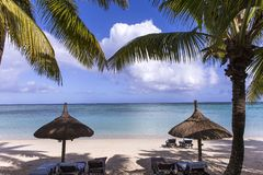 Arbres de noix de coco en île des Îles Maurice Photos stock