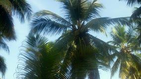 Arbres de noix de coco en hiver Photos stock