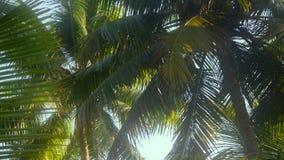 Arbres de noix de coco en hiver Photographie stock