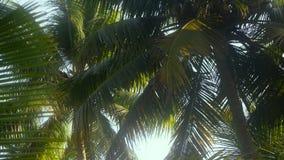 Arbres de noix de coco en hiver Photo stock