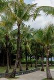 Arbres de noix de coco en parc Photos libres de droits