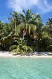 Arbres de noix de coco et eaux de turquoise Photos libres de droits