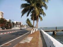 Arbres de noix de coco le long de rue - Gabon Images stock