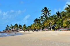 Arbres de noix de coco par la mer Photos stock