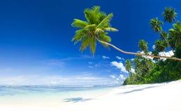 Arbres de noix de coco par la plage tropicale de paradis photos libres de droits