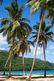 Arbres de noix de coco sur la plage images libres de droits