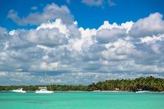 Arbres de noix de coco sur le bord de mer Images stock