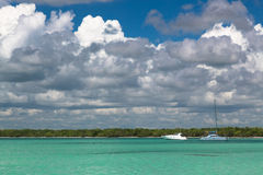 Arbres de noix de coco sur le bord de mer Photographie stock libre de droits