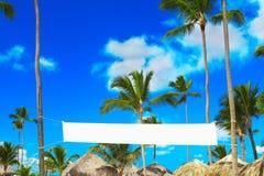 Arbres de noix de coco sur une côte Photographie stock