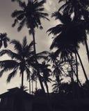 Arbres de noix de coco sur une plage photo stock