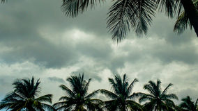 Arbres de noix de coco un jour nuageux Photographie stock