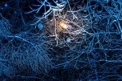 Arbres de nuit d'hiver en glace Photo stock