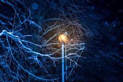 Arbres de nuit d'hiver en glace Photographie stock libre de droits