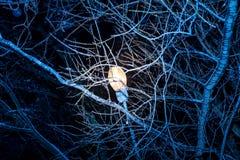 Arbres de nuit d'hiver en glace Photos libres de droits