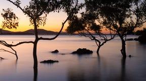 Arbres de palétuvier au coucher du soleil Photographie stock