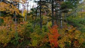 Arbres de Pan Across Forest With Colorful dans l'automne dans Chittenden, Vermont clips vidéos