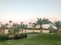 Arbres de paradis exotiques, usines, grands palmiers du sud tropicaux avec de grandes feuilles vertes et troncs forts forts dans  image stock