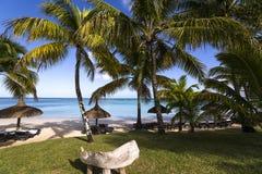 Arbres de parasols et de noix de coco en île des Îles Maurice Photo libre de droits