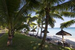 Arbres de parasols et de noix de coco en île des Îles Maurice Photos libres de droits