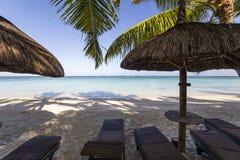 Arbres de parasols et de noix de coco en île des Îles Maurice Image stock