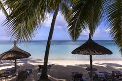 Arbres de parasols et de noix de coco en île des Îles Maurice Photos stock