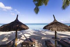 Arbres de parasols et de noix de coco en île des Îles Maurice Photographie stock