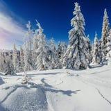 Arbres de paysage d'hiver bloqués par la neige Photographie stock