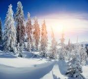 Arbres de paysage d'hiver bloqués par la neige Image stock