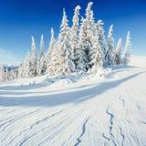 Arbres de paysage d'hiver bloqués par la neige Photos libres de droits