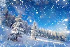 Arbres de paysage d'hiver bloqués par la neige, fond de bokeh avec le snowflak Images libres de droits